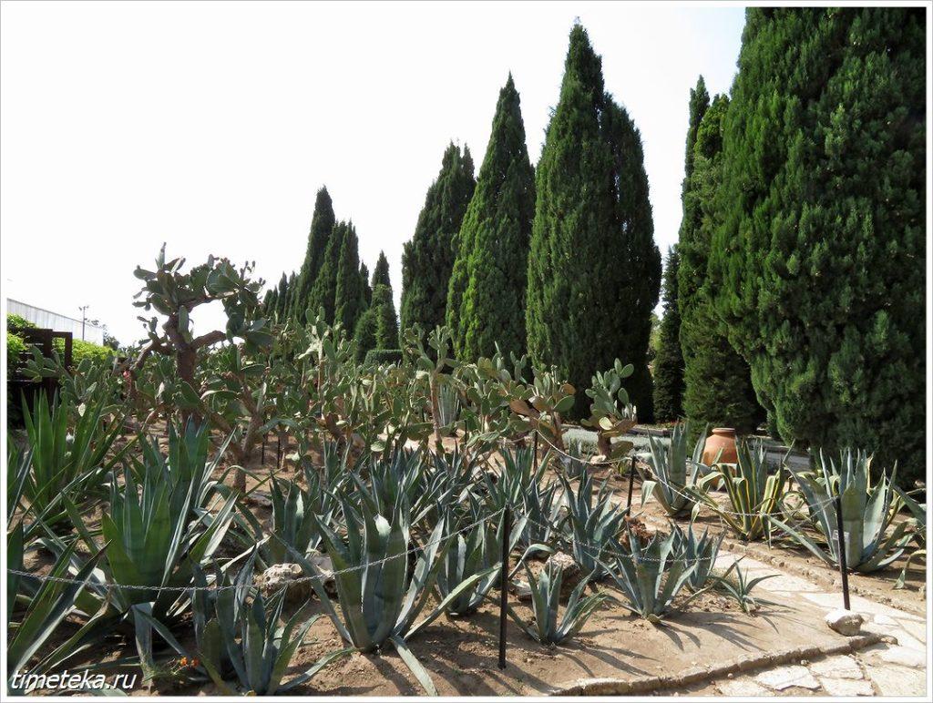 Коллекция кактусов. Балчик. Болгария