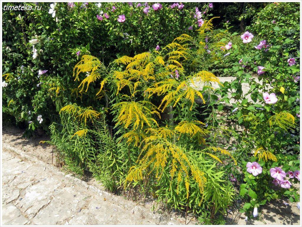 В Ботаническом саду. Балчик. Болгария
